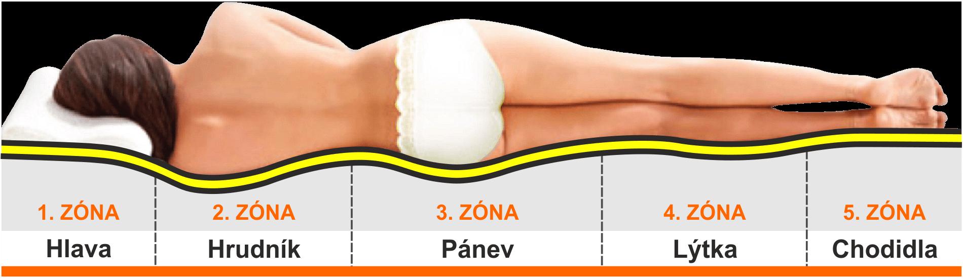 Anatomické zóny 5
