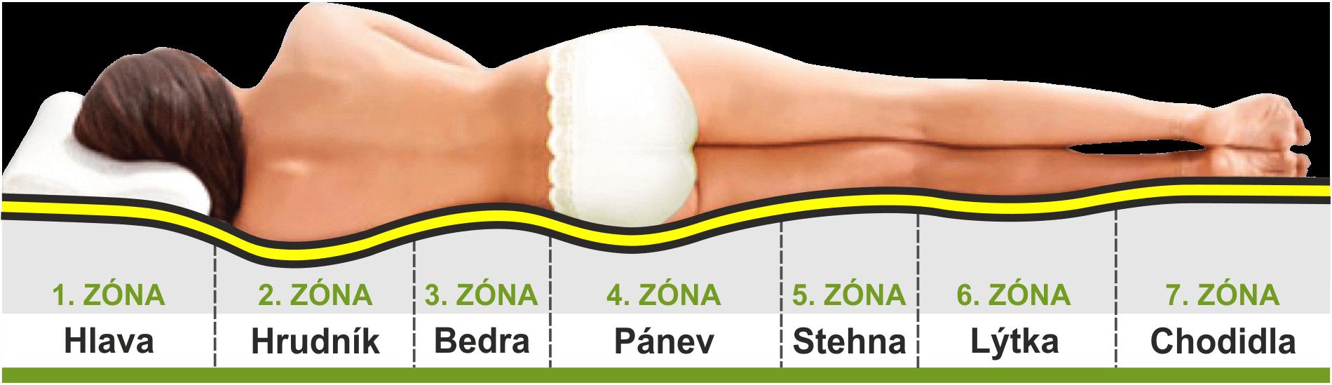 anatomické zóny